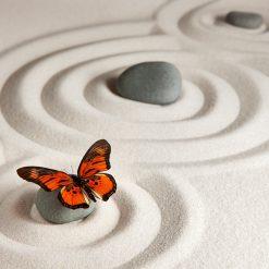 zen, meditation, yoga-5533537.jpg